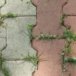Возможные способы избавиться от травы между тротуарной плиткой